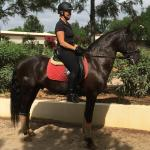 My favorite black stallion