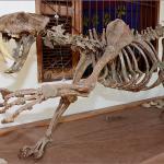 Tapipoca Prehistoric Museum