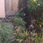 Remington room garden