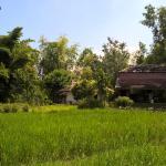 A walk around the adjacent rice fields
