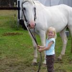 Children Friendly Horses and riding