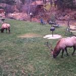 Deer Crest Resort Foto