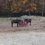Horses - My Saddle Brook Farm