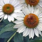 Foto de Minnesota Landscape Arboretum