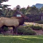 Elk Right Outside Your Door