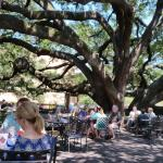 One of the Giant Live Oak trees on the patio.