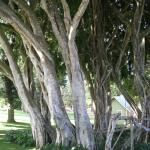What can I say other than I LOVE banyan trees