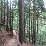 Little Qualicum Falls Trail