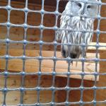 One of the beautiful birds you can see at the Owl & Falconry Centre at Johnson's Garden Centre