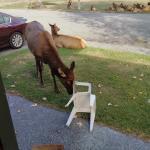 Elk Meadow Cabins Foto