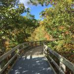 Trail to the overlook
