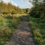 Some fantastic walks through the woods along the ash paths and around the water