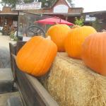 Jack Creek Farms, Templeton, CA