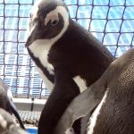 African Penguin & Seabird Sanctuary