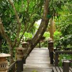 Photo de Black Ant Coffee and Resort