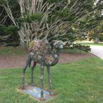 Topiary Camel at Doris Duke;s former home The Breakers