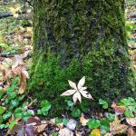 Photo de Flora Bora Forest Lodging