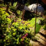 Lovely Sunny Summer in the Garden
