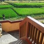 Rooms are set in rice fields