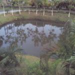 the small pond within the campus