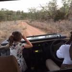 lions on the road during family game drive