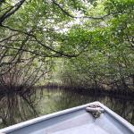 Bintan Mangrove Green - Day Tours