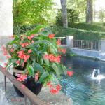 Bassin et fleurs