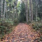 Crisp fall day on a wooded trail