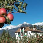 Herbst-Apfelernte