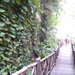 Jinta Andaman Foto