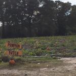Hickory Ridge Farm