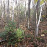 Evergreen Forest B&B Foto