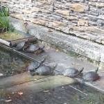 Schildkröten Teich