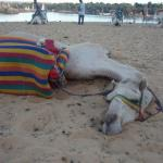 After my camel ride, Ramble immediately napped & I wanted to join him