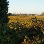 Vue de la chambre, belles couleurs dans les vignes