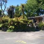 Paradiso Cafe - lush green setting