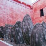 Cochineal farming comes to MACO