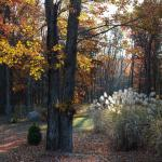 Fall Leaves at Beretta's Place