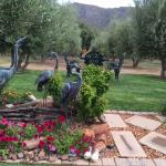 garden leads to the Olive trees