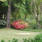 Nutswood gardens