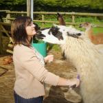 At UK Llamas