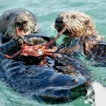 visit the sea otters on our 10:30 am sealife sail