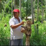 Monkey show - harvesting coconuts