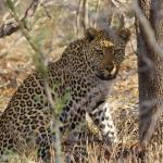 Game Drive October 2015