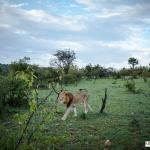 Wildlife on Ol Kinyei Conservancy