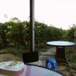 Blick zu den Weinstöcken
