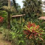 Photo de Ara Ambigua Lodge