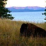 Photo de Lake Yellowstone Hotel and Cabins