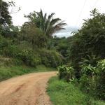 Landscape - TikiVillas Rainforest Lodge Photo