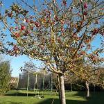 automne dans le jardin